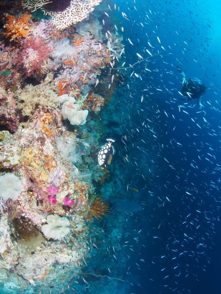 Colourful corals of Raja Ampat