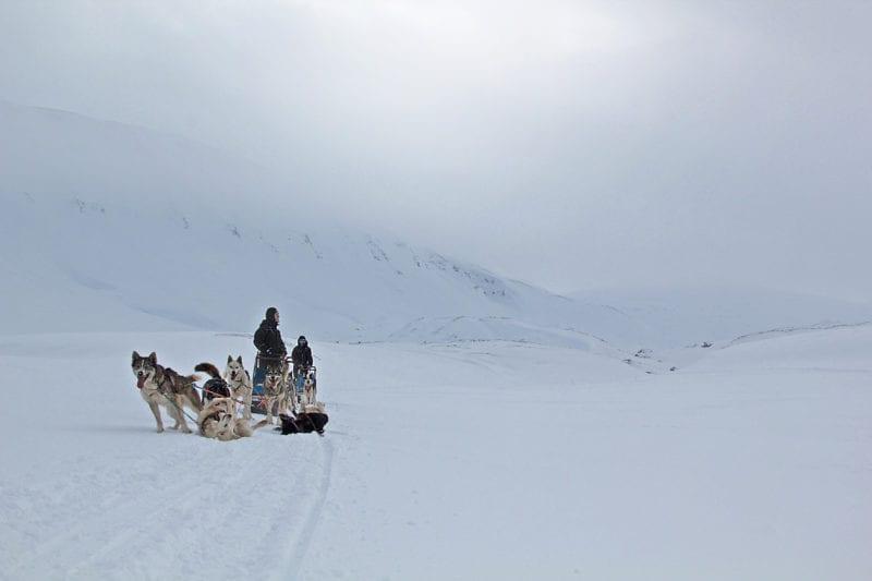 a group dog sledding across the ice