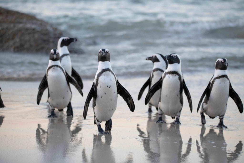 penguins beach pelorus