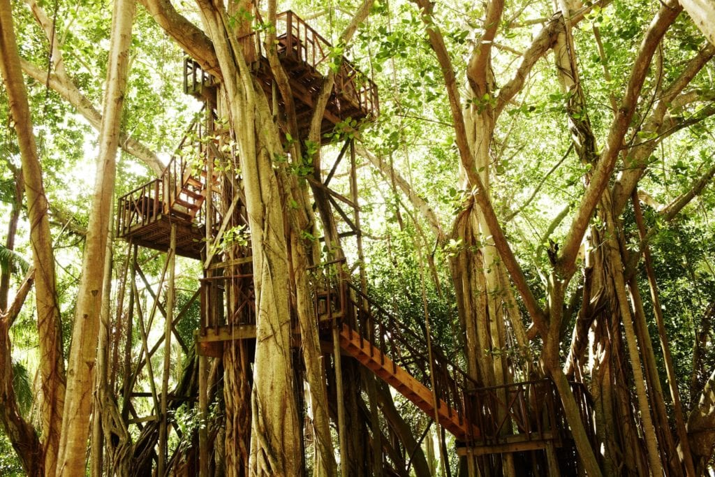 tree house dining area fregate island