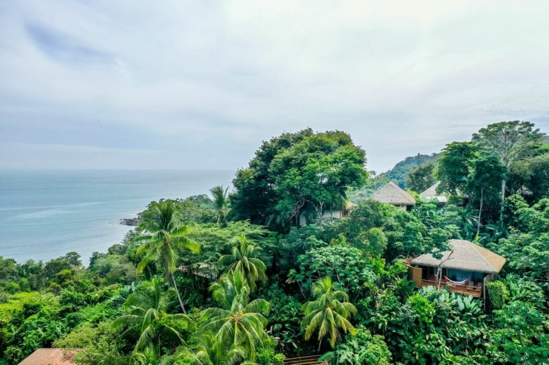 Huts immersed in jungle and rich biodiversity