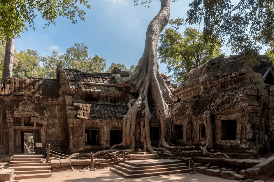 Temple with tree vines in Cambodia, Indochina