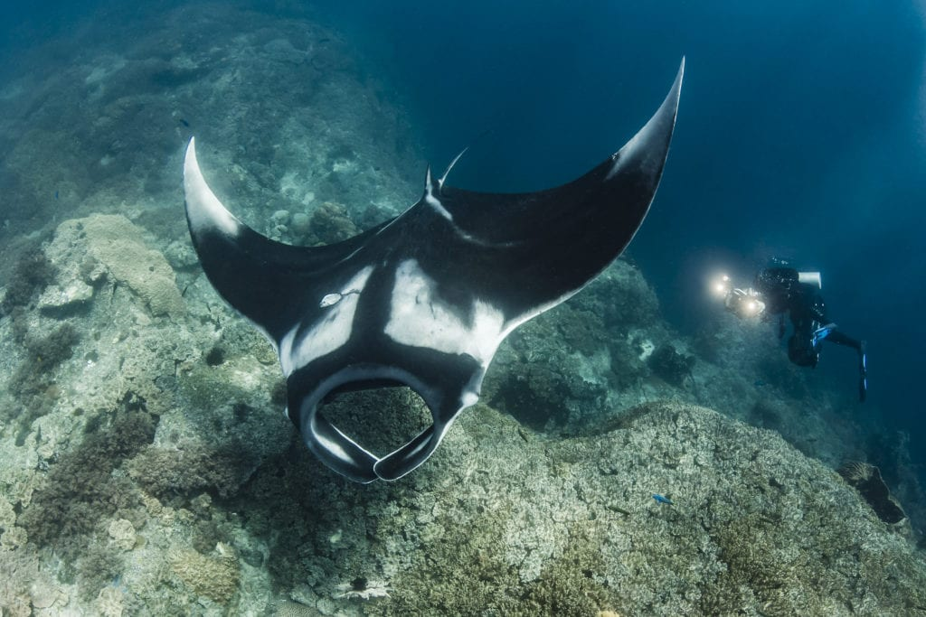 Indonesia Misool diving with Manta Ray