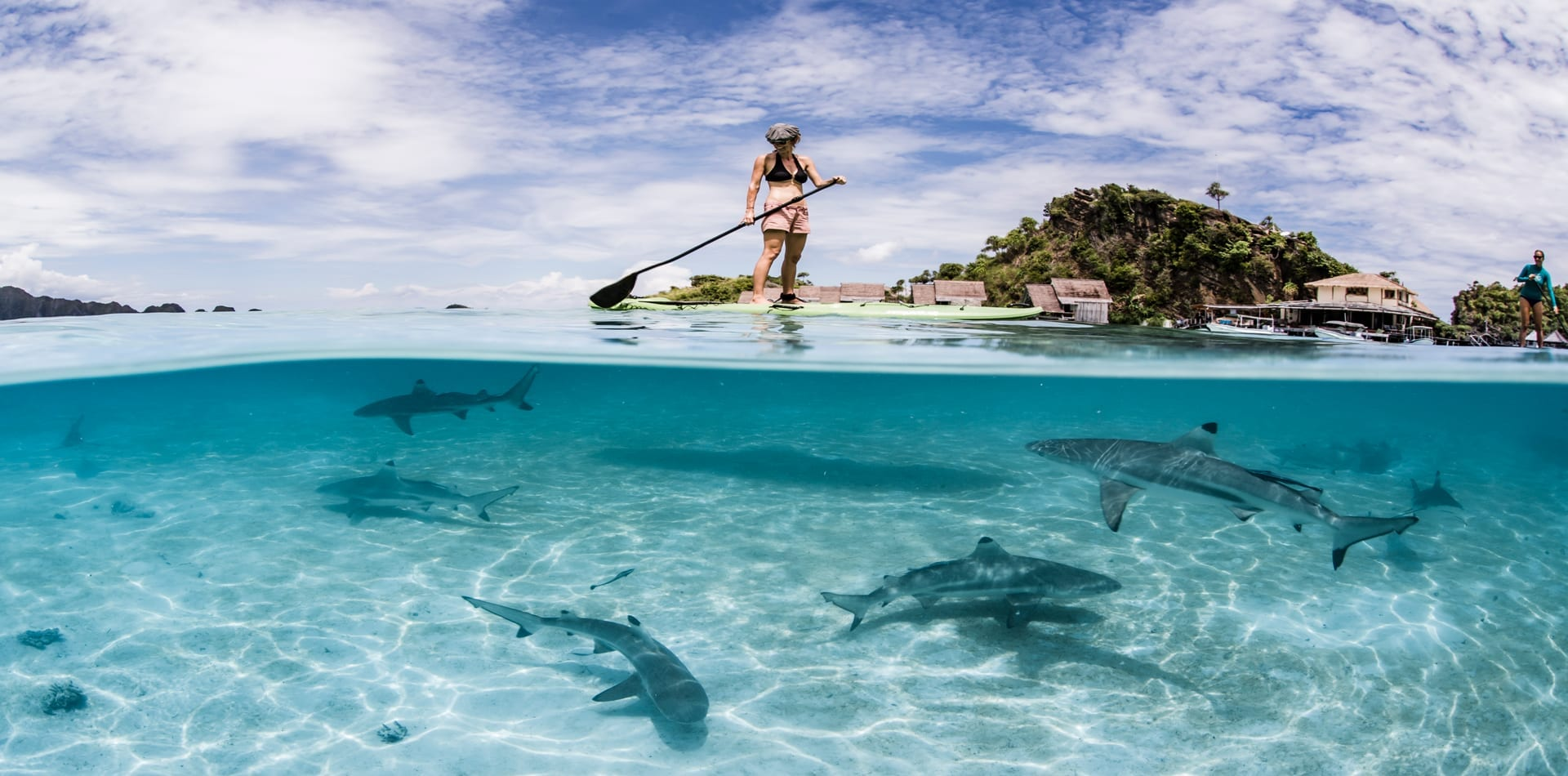 Paddle boarding with sharks Misool Indonesia hero image
