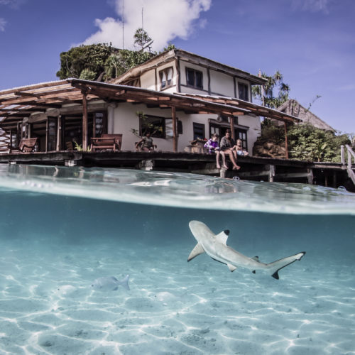 Indonesia Misool shark underwater water cottage