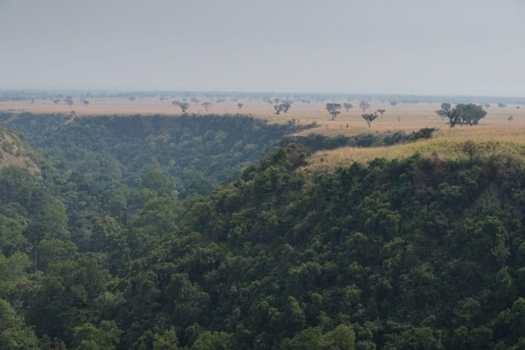 Jungle of Uganda