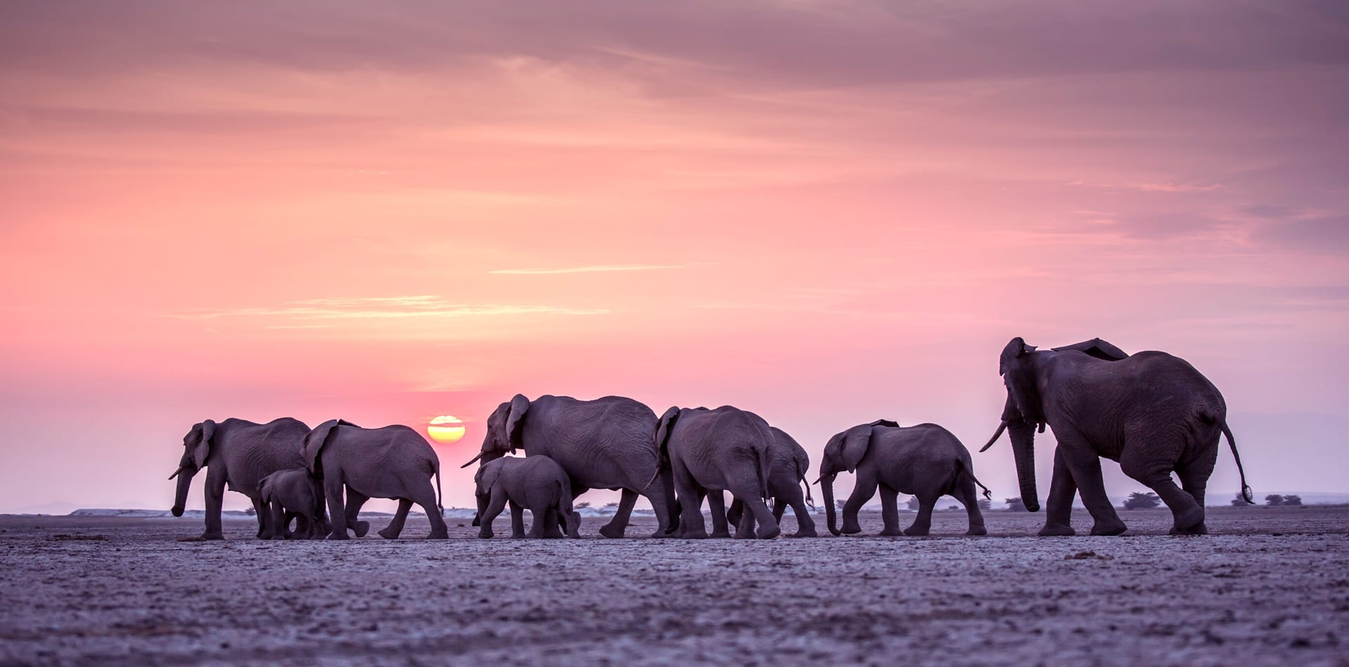 Kenya Elephants Walking Sunset Hero