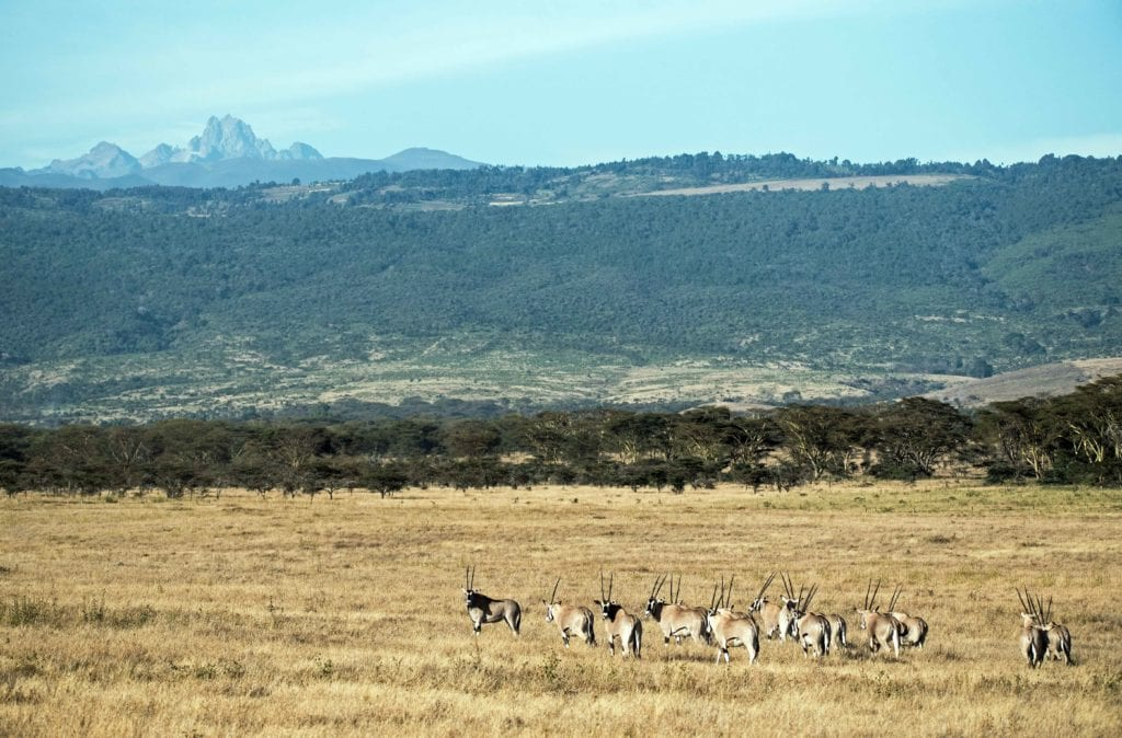 Mount Kenya Wildlife Africa