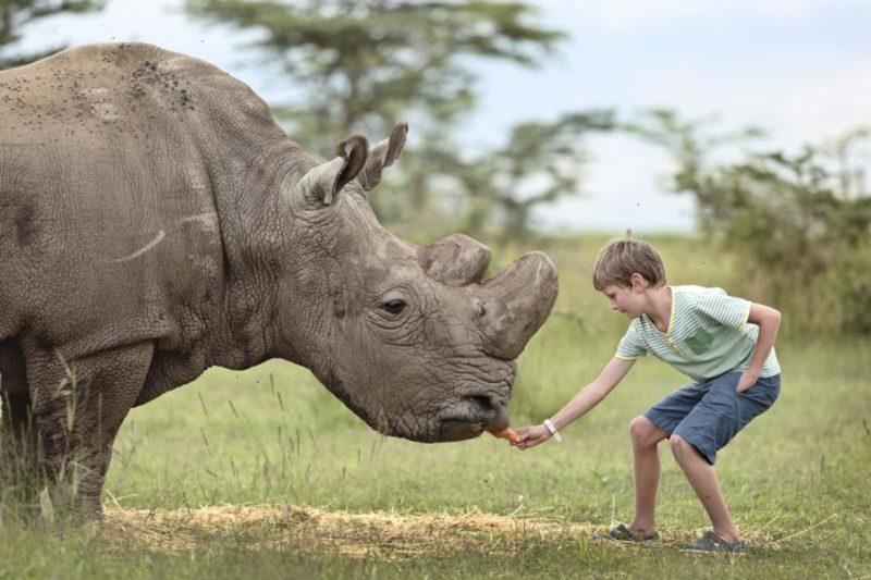 A child close enough to feed a rhino at the Ol Pejeta Bushcamp, Kenya