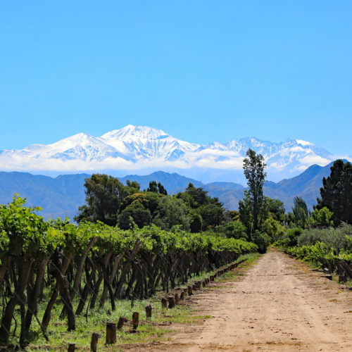 Vineyards in the Andes in Mendoza's prestigious Uco Valley