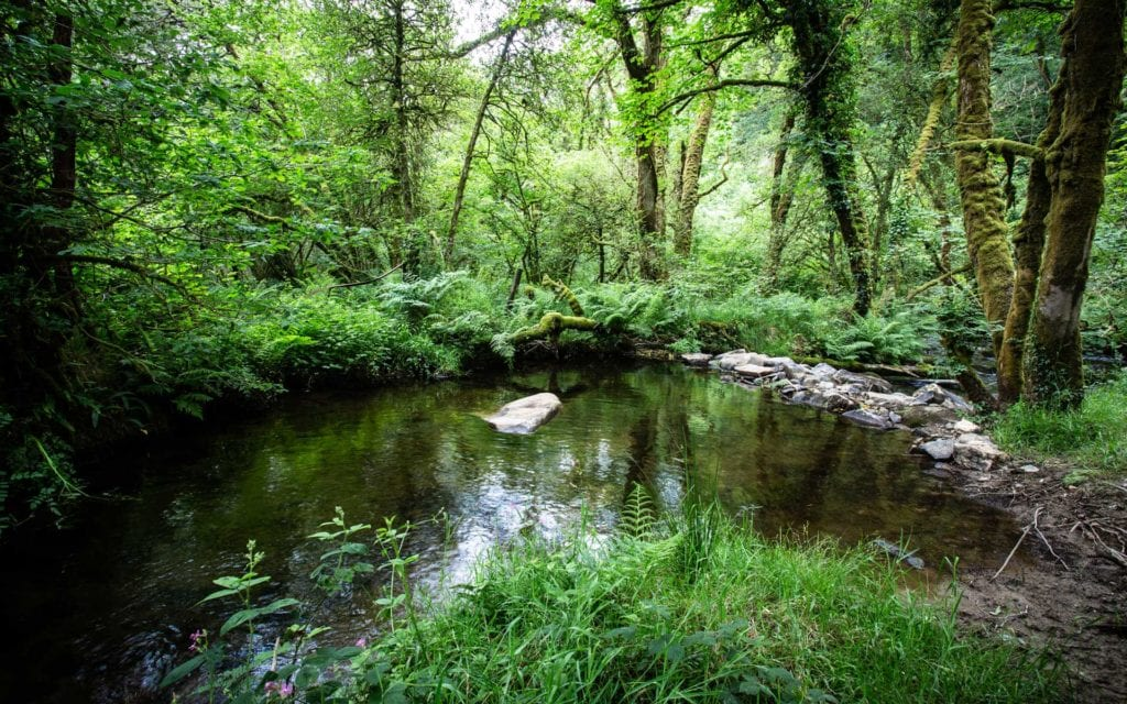 Woodland River View Pembrokeshire Wales UK
