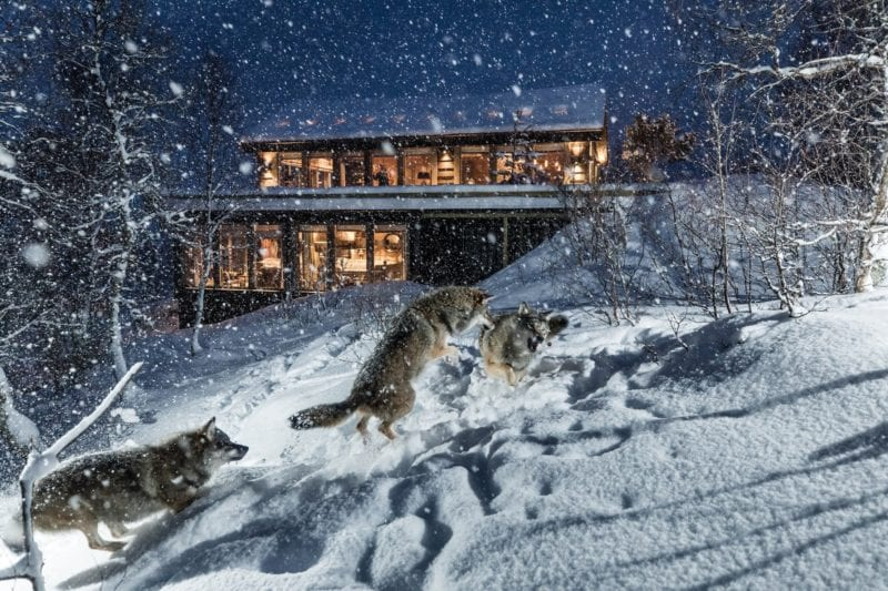Wolf Lodge, remote and nestled in on of the most northern animal parks