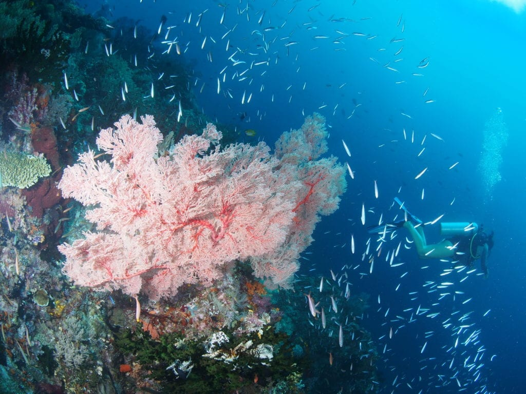 fish gathered around colourful coral