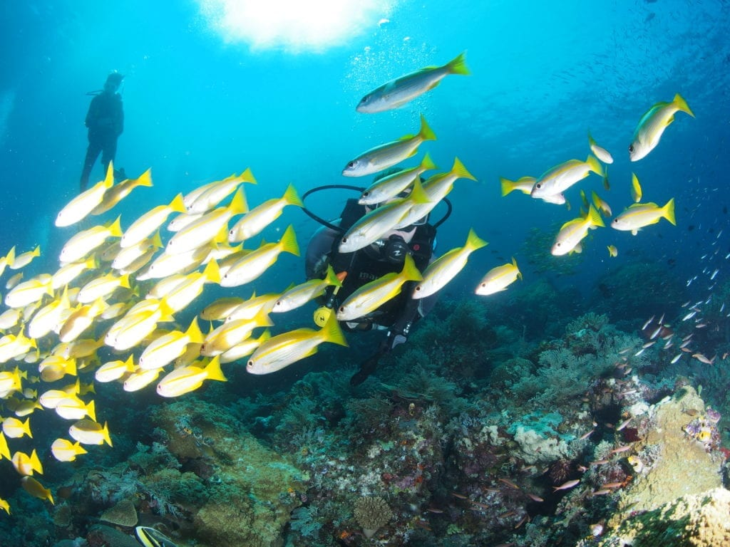 Scuba diving Raja Ampat's vibrant underwater world