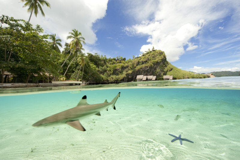 mesmerising shot of a shark just off the beach