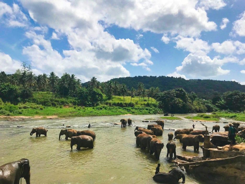 Elephants bathing in river in Sri Lanka