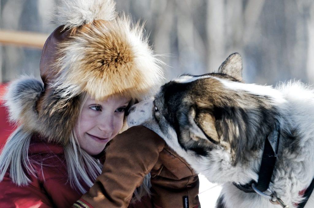 Sweden Arctic Lodge Husky