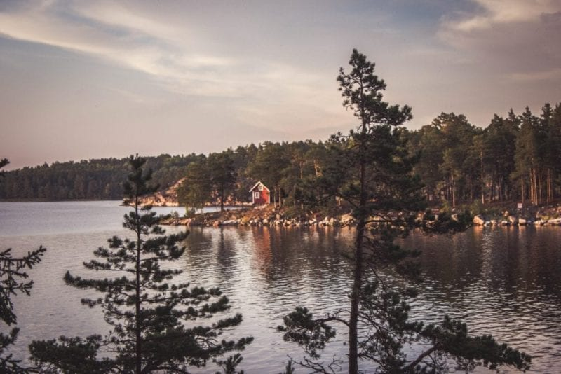 Beautiful pristine Swedish forest to the waters edge