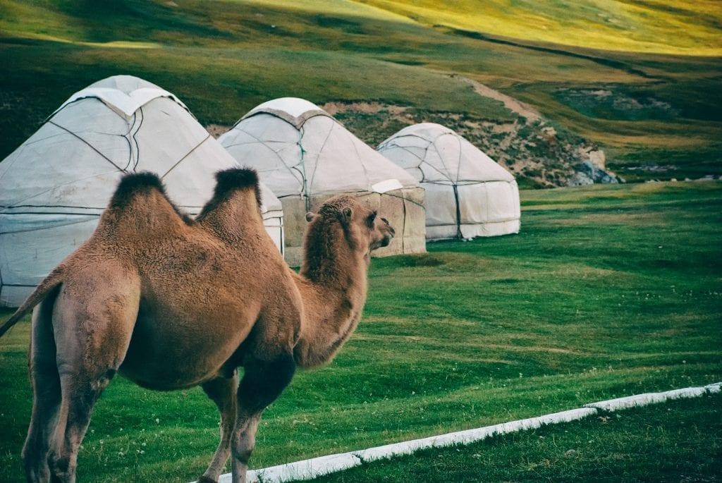 camel yurts tash rabat yurt camp