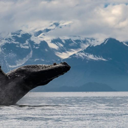 Wild Encounters in Southeast Alaska