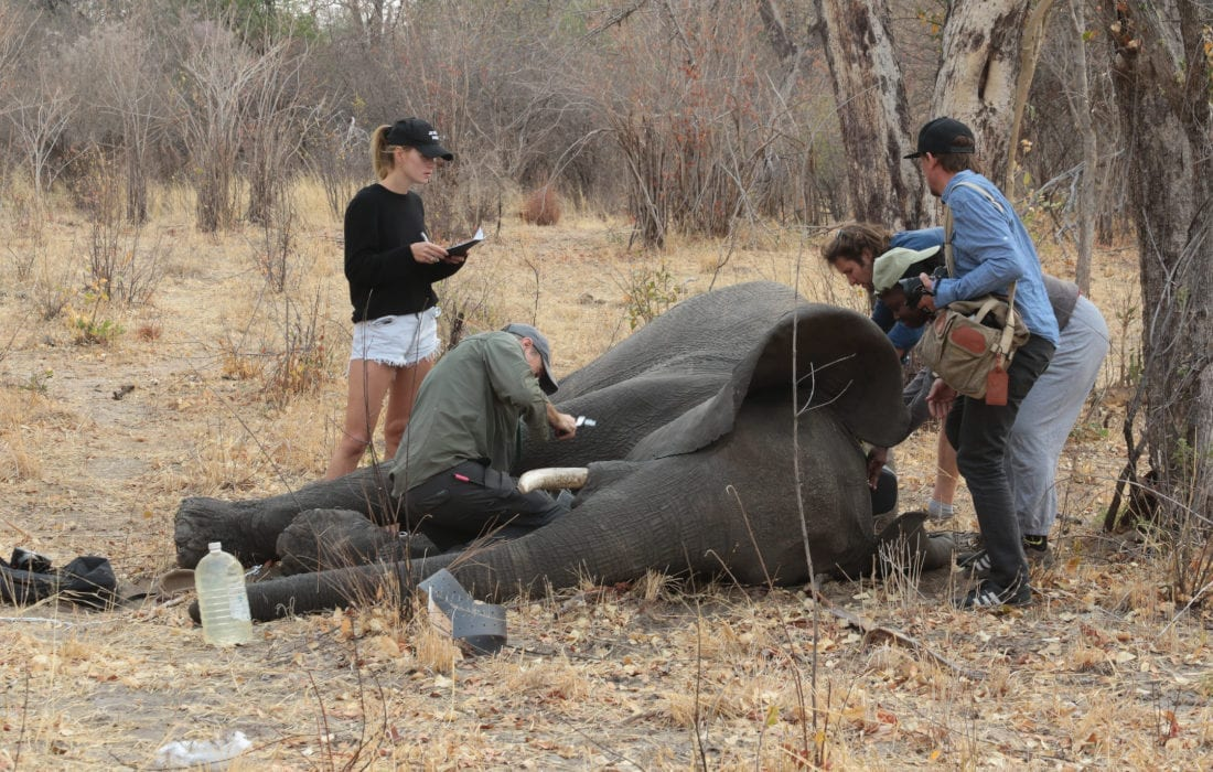 Experts tracking an elephant in Angola