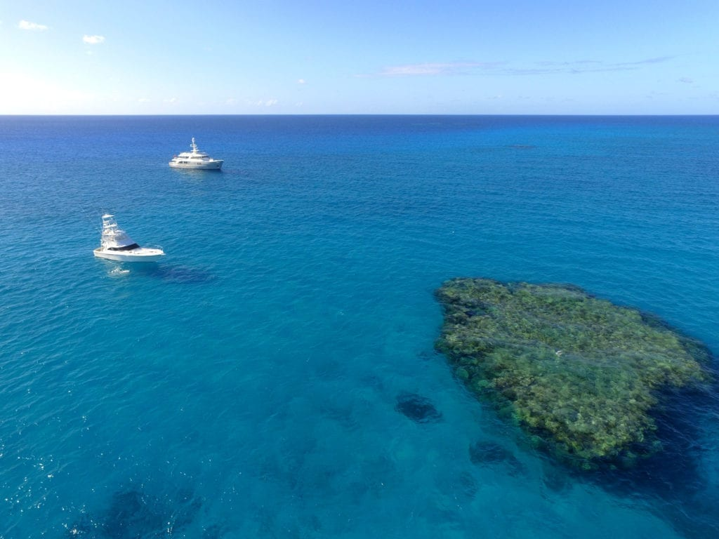 Beluga and Chase Boat Minke in The Coral Sea