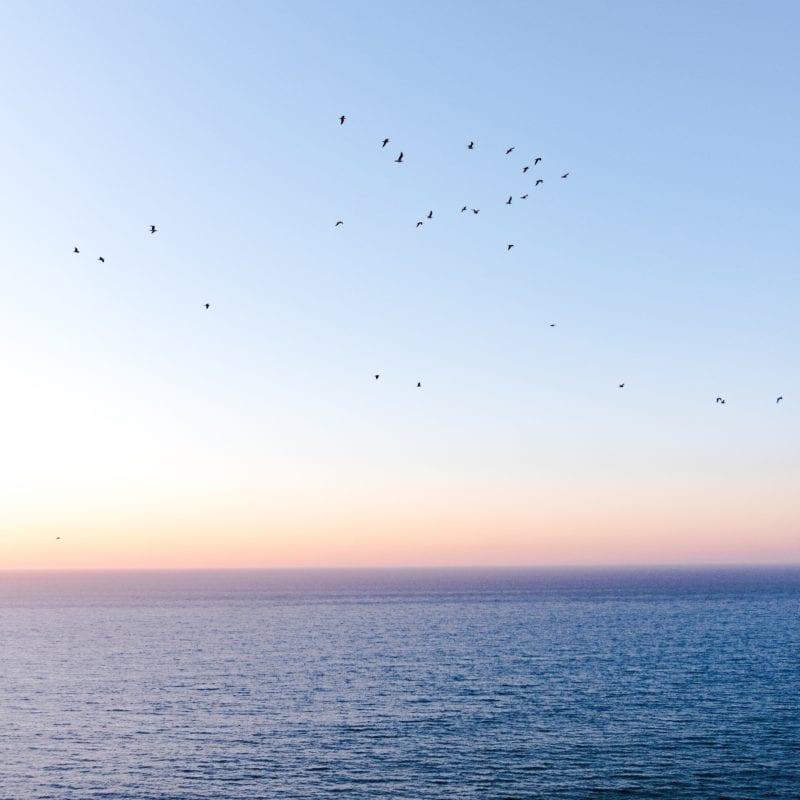 beautiful setting of birds across the Atlantic at sunrise