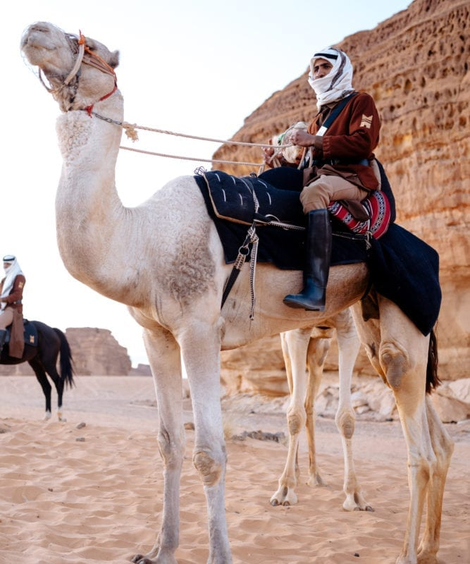 Guide sitting on a camel in AlUla, Saudi
