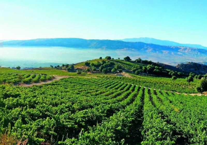 Vineyards of Chateau Qanafar in Lebanon