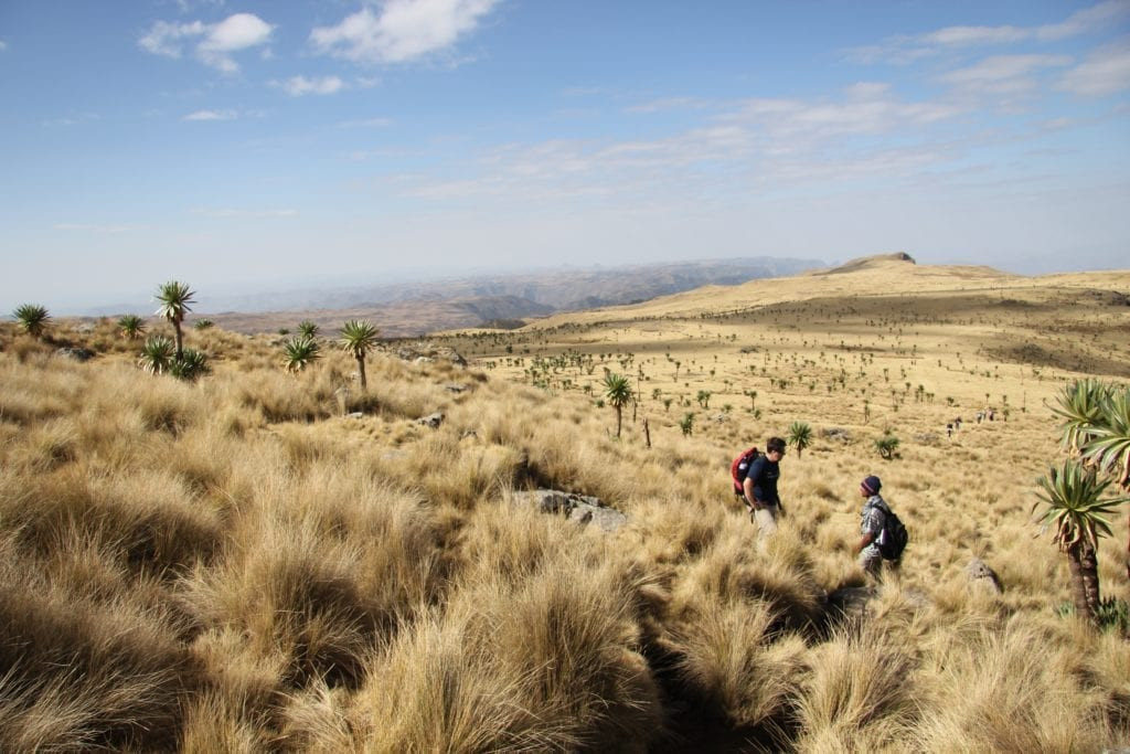Walking the Grasslands of Ethiopia