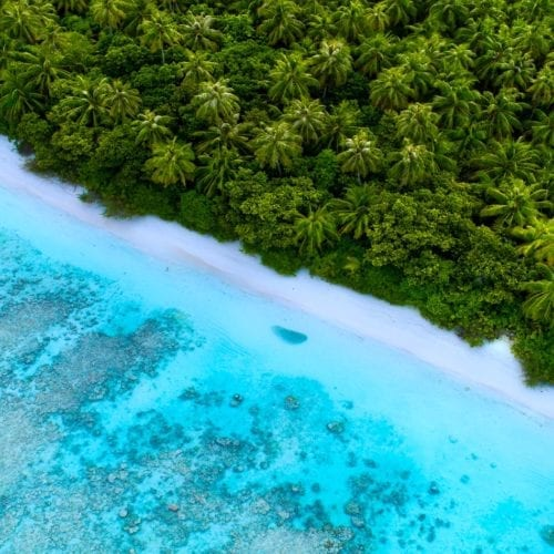 aerial shot of pristine water meets topical palm fringed beach