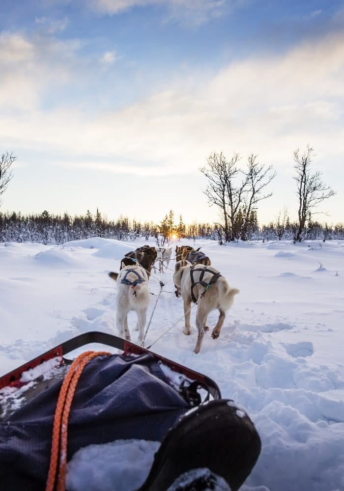 Huskies pulling a sled in Norway