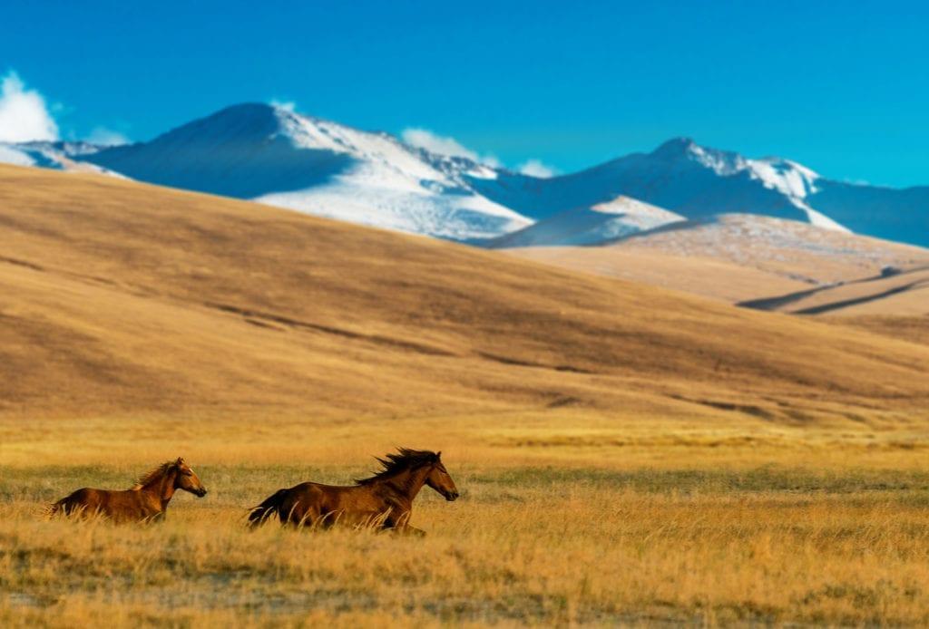 kazakhstan wild horses running
