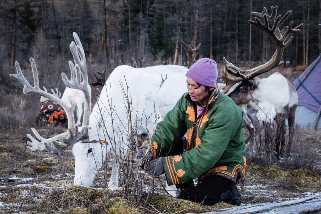 Mongolia reindeer herder