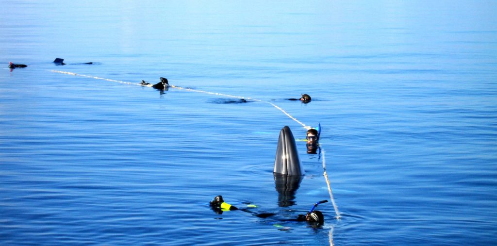 Swim with Minke Whales in the Great Barrier Reef