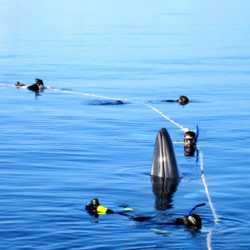 Swim with Minke Whales Down Under