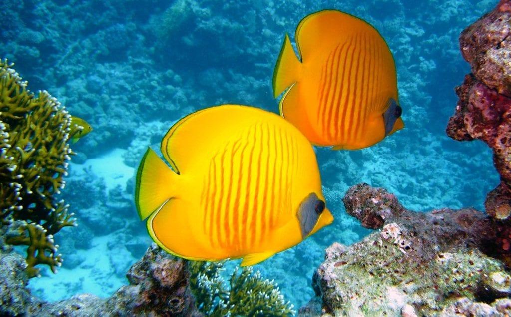 vibrant aquatic life of Mozambique
