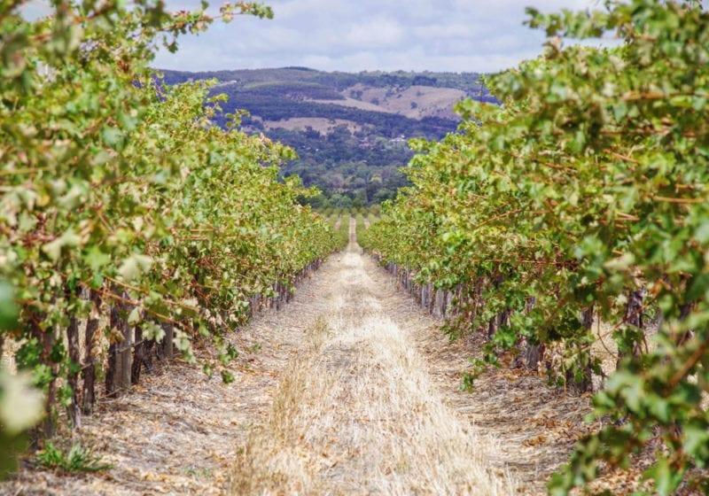 Wine Vineyards in Australia