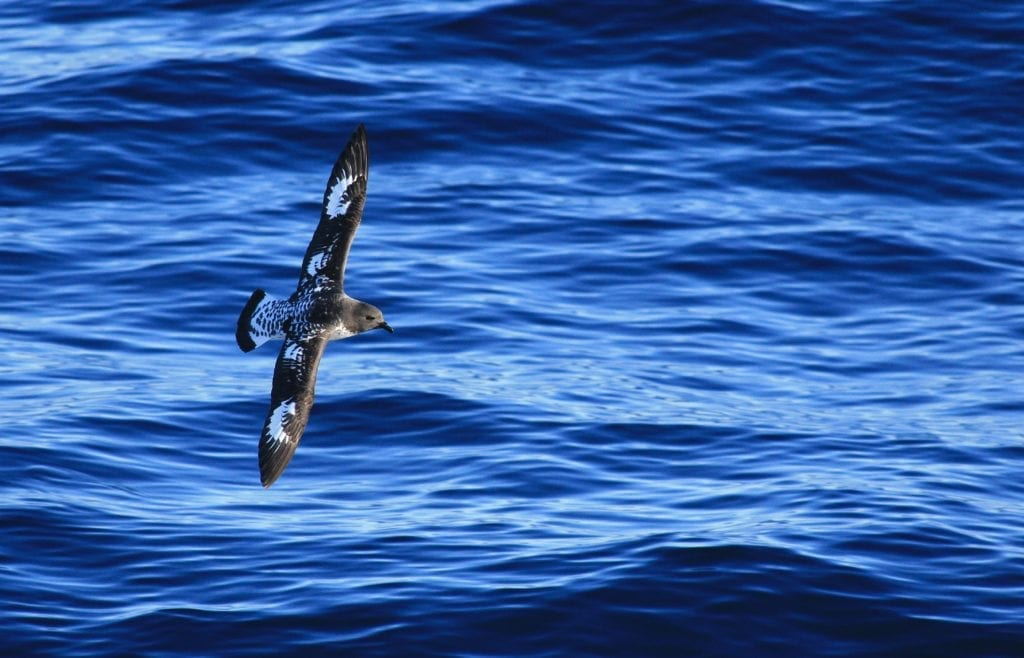 A bird gliding over the water in Islas Malvinas, Falklands