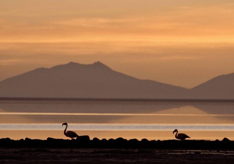 bolivia Flamingos on the Salt Flats at Sunset