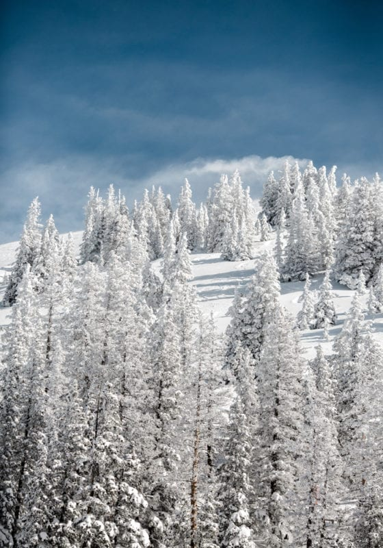 Snow Covered Forests and Skiing in Colorado USA
