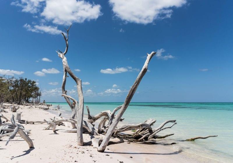 Cuba White Sand Beach and DriftWood
