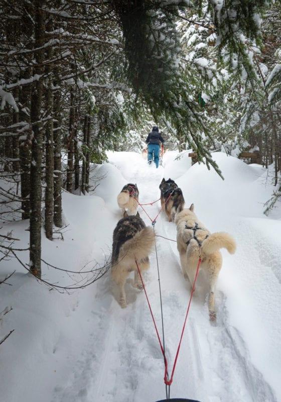 Dog Sled Baffin Island