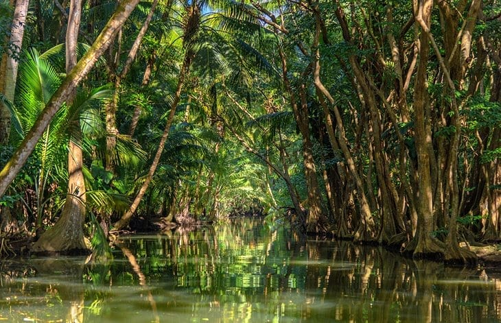 The enchanting jungle-fringed Indian River, Dominica
