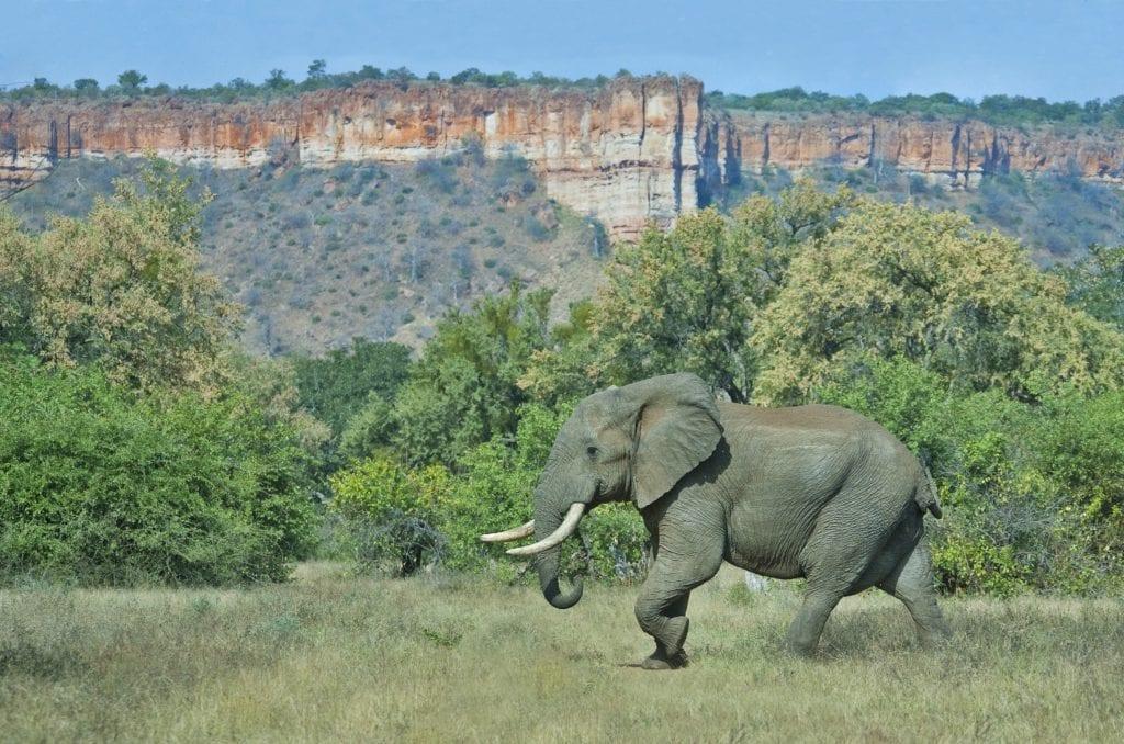 Elephant infront of the Chilojo Cliffs