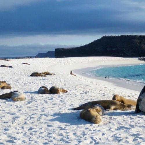 Galapagos Wildlife Sea Lions on a Beach
