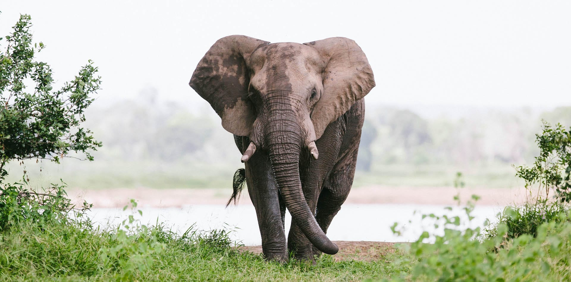 Intimate image of an elephant emerging from the water