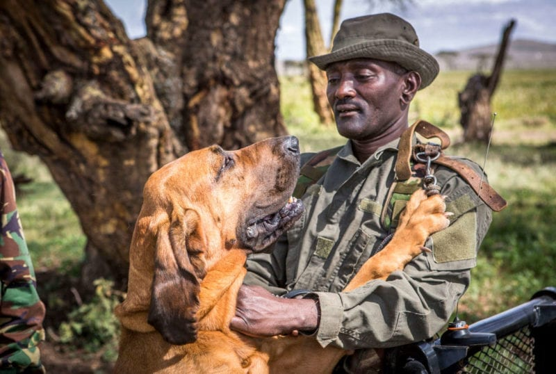 A conservationist in Kenya with his hound