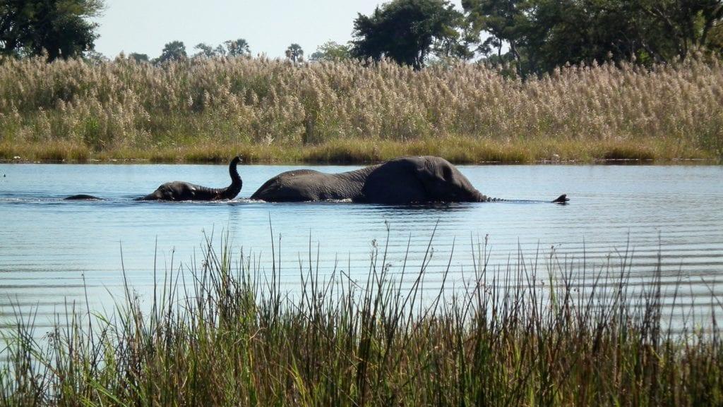 Mother and baby elephants, Okavanga Delta