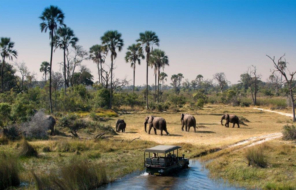 Okavango Delta safari game drive, Botswana